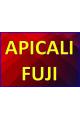 APICALI FUJI